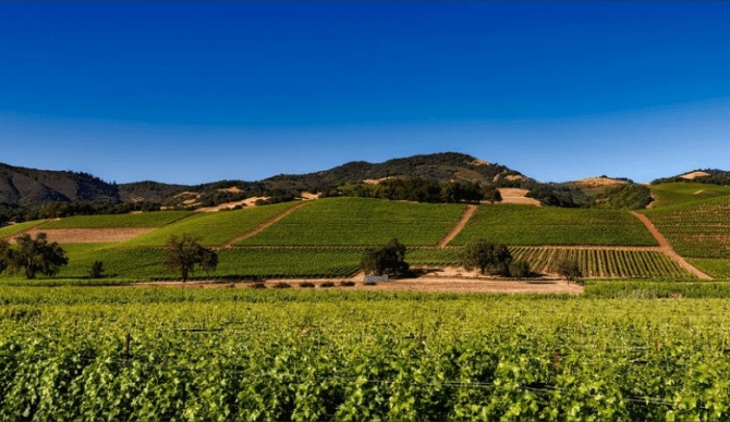 Napa, California for CME, CLE, and CE